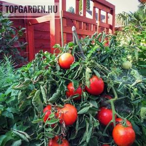 Szép kerti fotók