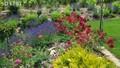 Vidéki kert színei, virágai