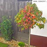 Kertépítés ősszel