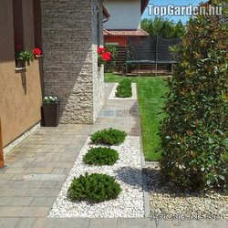 Tiszta udvar, kerti növények